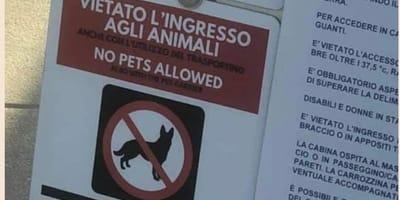 Vietano l'ingresso ai cani in ascensore per paura Covid-19: è polemica