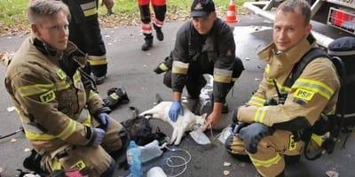 <p>Gdyńscy strażacy zabrali koty z płonącego mieszkania i udzielili im pierwszej pomocy</p>
