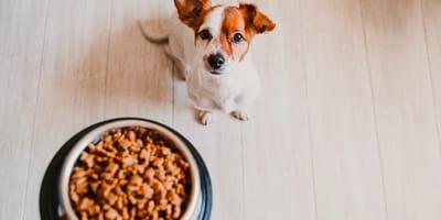 Kleine Hunde ernähren: Fragen und Antworten