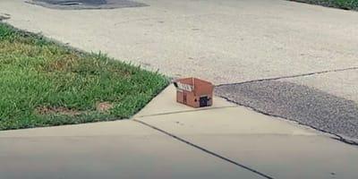 scatola di cartone in un vialetto