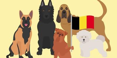 Karikaturen belgischer Hunderassen