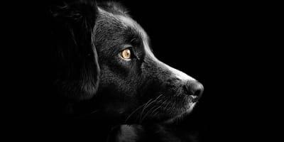perro rescatado influencer
