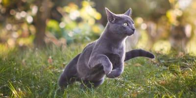 Die Anatomie der Katze: Körperbau, Skelett und Sinnesorgane