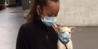 Zurigo: il cane con la mascherina anti covid-19 fa polemica