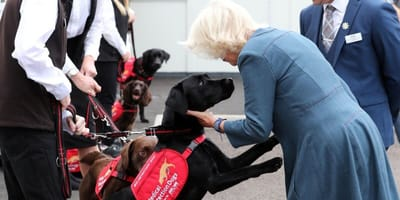 Duchess of Cornwall congratulates Covid-detecting dogs for their hard work
