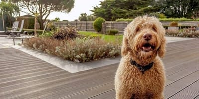 A woolly dog sits on a large cottage deck