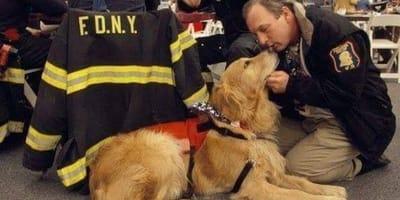 cane e pompiere
