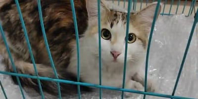 gato perdido en aeropuerto