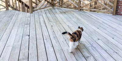 gato paseando de espaldas
