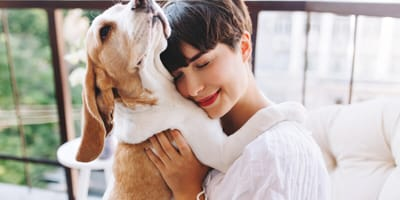 Beagle dog with its owner hugging