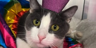 gato parálisis