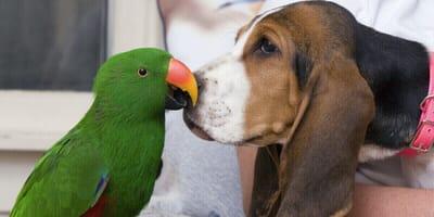 perro y loro juntos