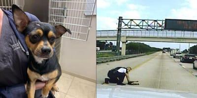 Dog hit by car on motorway