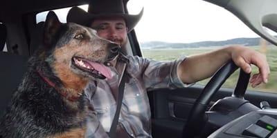 Schäferhund sitzt auf Beifahrersitz, neben ihm sein Halter
