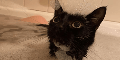 gato en la bañera