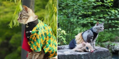 cats dressed up in costumes