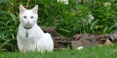 gatto bianco sull'erba