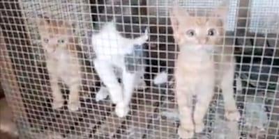 gatti rinchiusi in gabbia