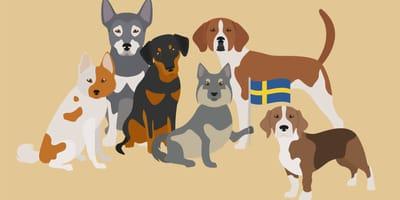 Karikaturen schwedischer Hunderassen