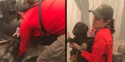 cane salvato dalle fiamme