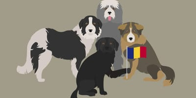 Karikaturen rumänischer Hunderassen