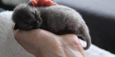 Patschnasses Straßen-Kätzchen: Was sie an seinem Bauch sieht, reißt ihr das Herz heraus