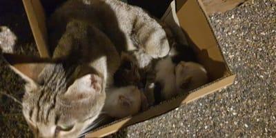 Kotka i kocięta porzucone w pudle.