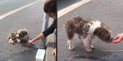 donna accovacciata vicino a un cane legato ad un palo