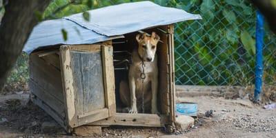 <p>Psy będą mogły być trzymane na uwięzi tylko tymczasowo, i nie może to być łańcuch</p>