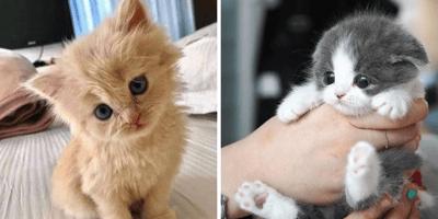 gattino arancione a sinistra e gattino bianco e grigio a destra