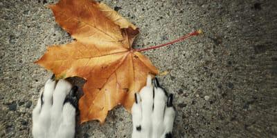 El secreto por el que el otoño es la época favorita de tu perro (y también será la tuya)
