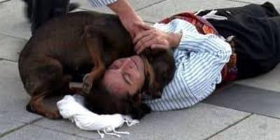 Pies podchodzący do bezdomnego aktora.