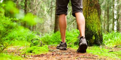 Grzybiarz widzi kierowcę, który zostawia coś w lesie. Kiedy podchodzi bliżej, jest przerażony