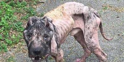 Umierający pies puka do drzwi, żeby prosić o pomoc