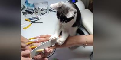 Mau w salonie manicure