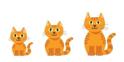 ¿Hasta cuándo crecen los gatos? Todas las etapas de la vida felina