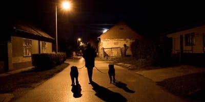una persona pasea con dos perros por la calle de noche