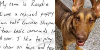 messaggio su foglio e cane randagio
