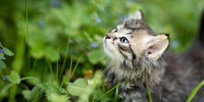 Giardia gatto terapia