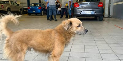 perro automóviles