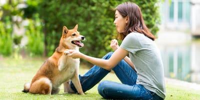Asiatische Hunderassen: Treue Gefährten mit Seltenheitswert