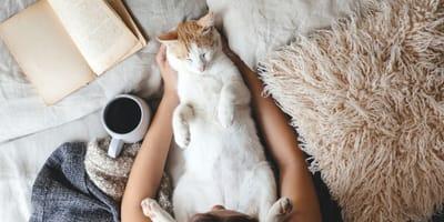 gato duerme en alfombra