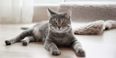 Do cats miss their owners?