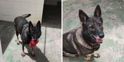 adopcion perro nica policia