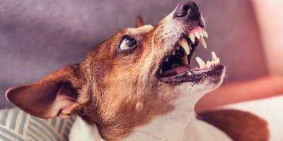¿Puede un perro contraer la rabia en España en 2020?