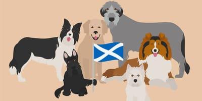 Szkockie rasy psów - poznaj psy myśliwskie i pasterskie pochodzące z zielonej Szkocji