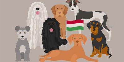 Beschützend und eigenständig: Hunderassen aus Ungarn