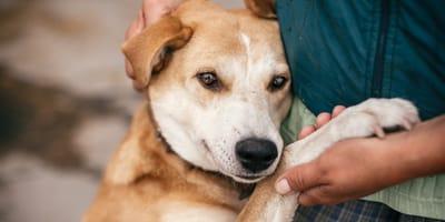 Los mejores nombres para perros criollos machos: originales y divertidos