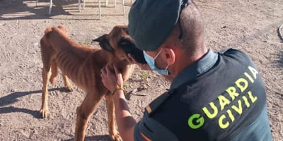 agente guardia civil examina perro esqueletico