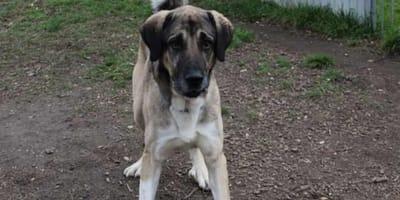 Con le lacrime agli occhi, una famiglia riporta il cane al rifugio